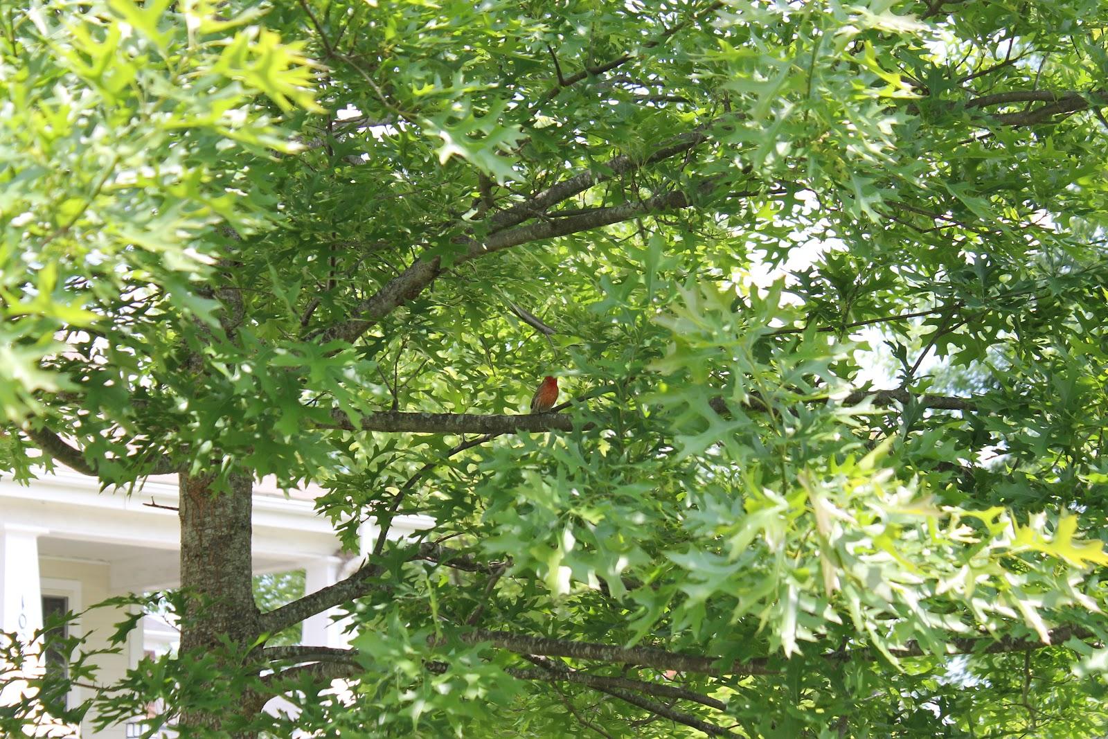 the stay at home mom u0027s backyard birding blog