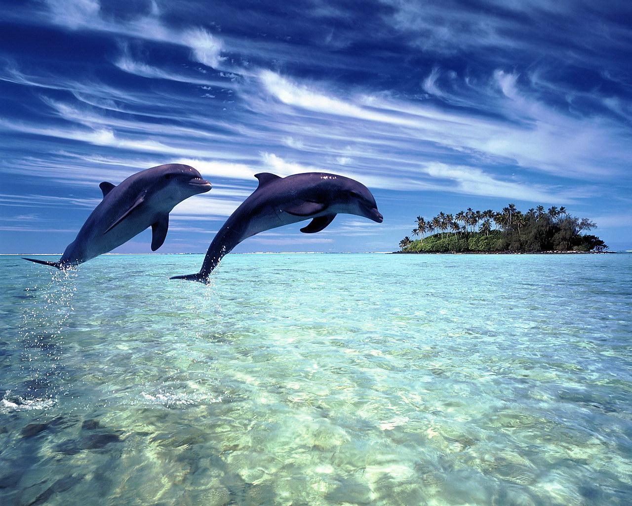 http://4.bp.blogspot.com/-t-xe8nwIY4E/T-lqJ8MIMXI/AAAAAAAAC9k/keLzyfQwY60/s1600/Dolphin+pictures.jpg