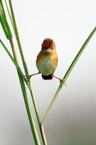 Pájaro Ninja