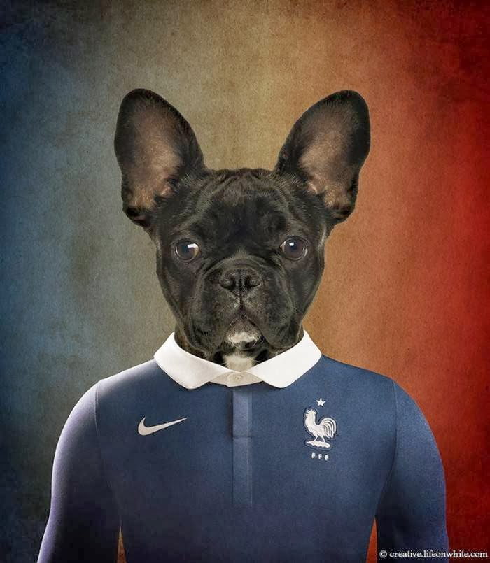 France – French Bulldog