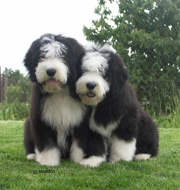 Saved by dogs kinds of collies big or little something for most