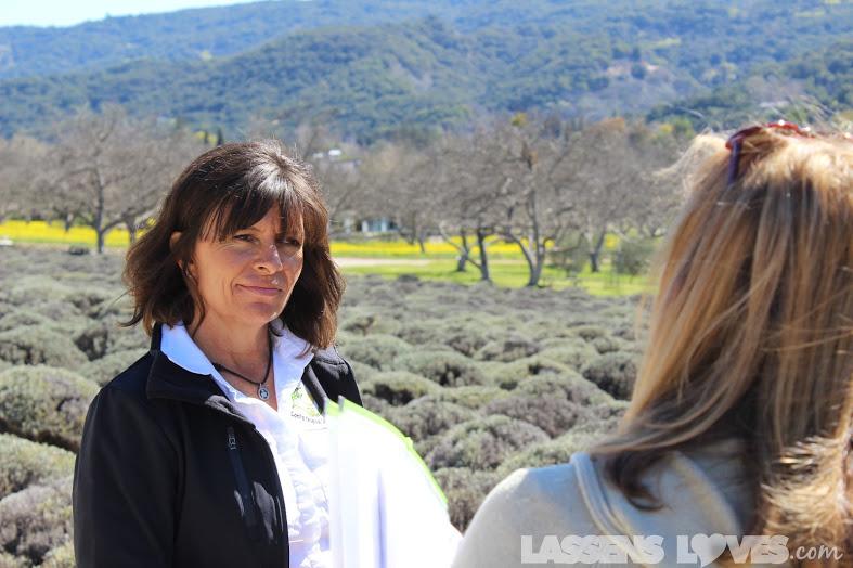 lassensloves.com, Lori's+Original+Lavender+Lemonade