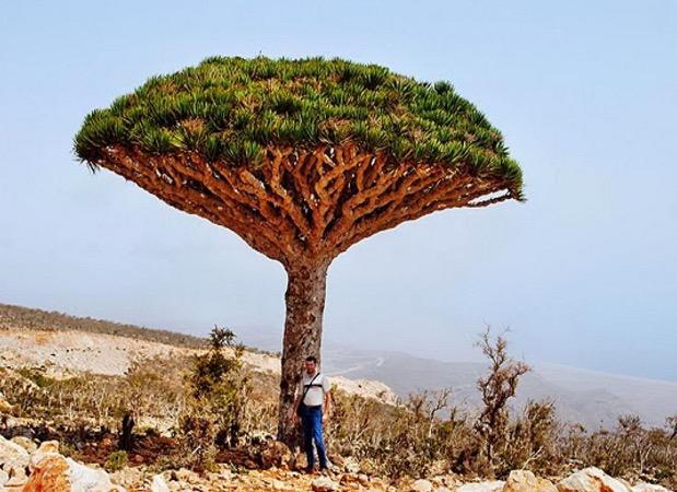 Pulau Socotra Yemen, Pulau yang Didakwa Tempat Dajjal Dirantai