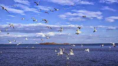 Birds in Pulicat lake bird sanctuary tourism