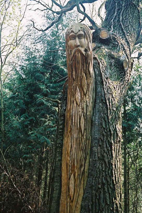 Pokok Gaharu Hutan Pokok Sebab Puaka Hutan