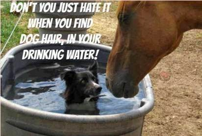 Don't you just hate it when you find dog hair in your drinking water meme