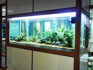 Aquarium Business