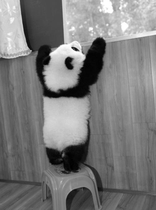 Pandas tiernos tumblr - Imagui
