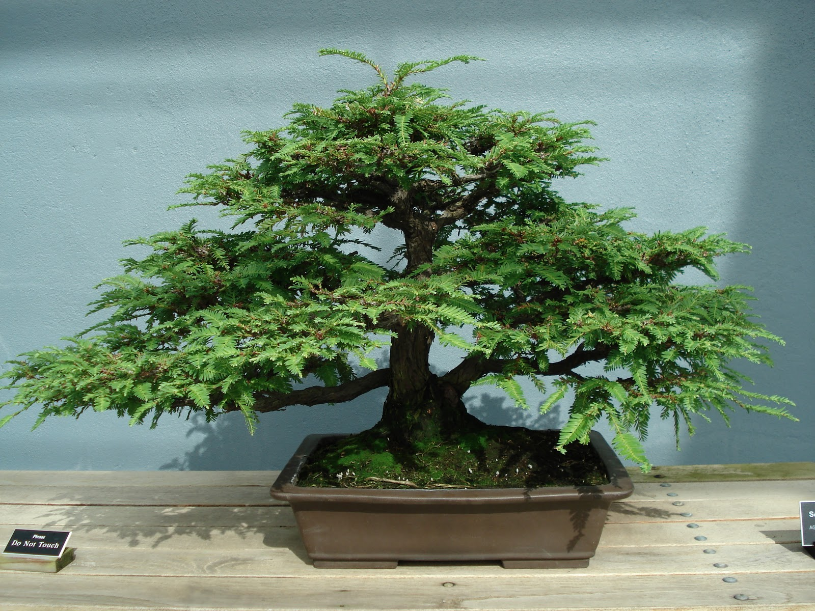 World39s Smallest Plants Bonsai Trees Images Pictures HD