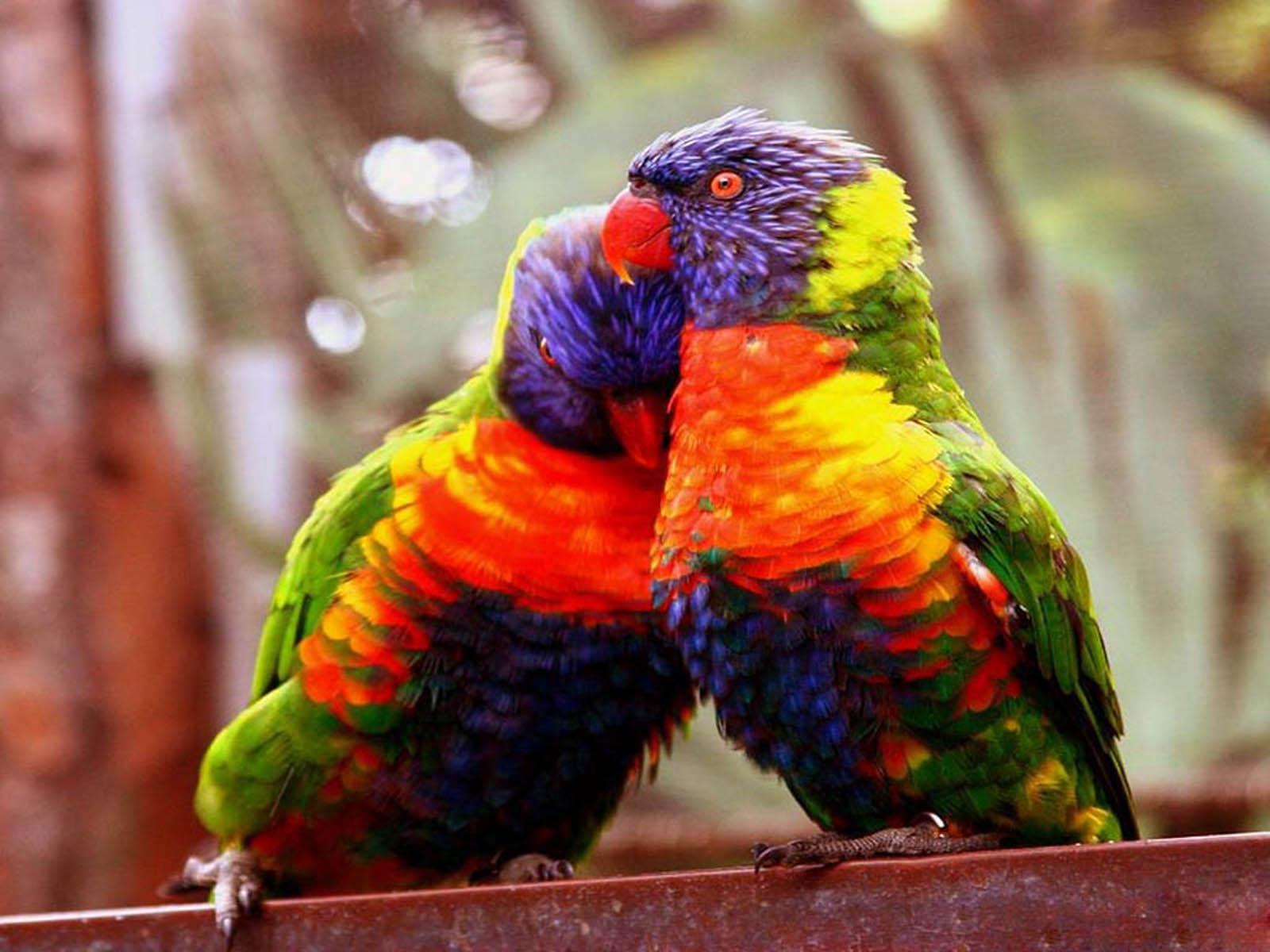 Love Birds couple Wallpaper : wallpapers: Love Birds Wallpapers