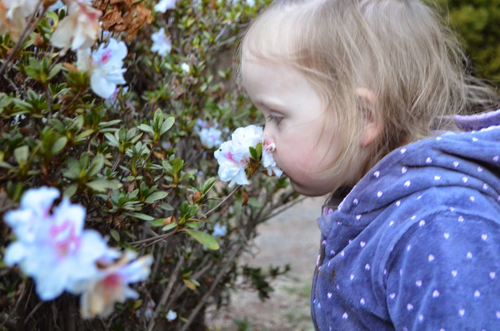 Combat Depression by taking time to smell flowers