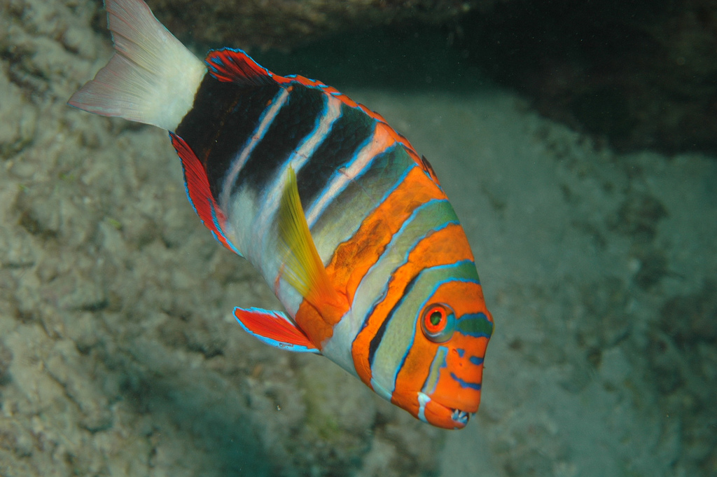 Animals of planet earth august 2011 for Great barrier reef fish