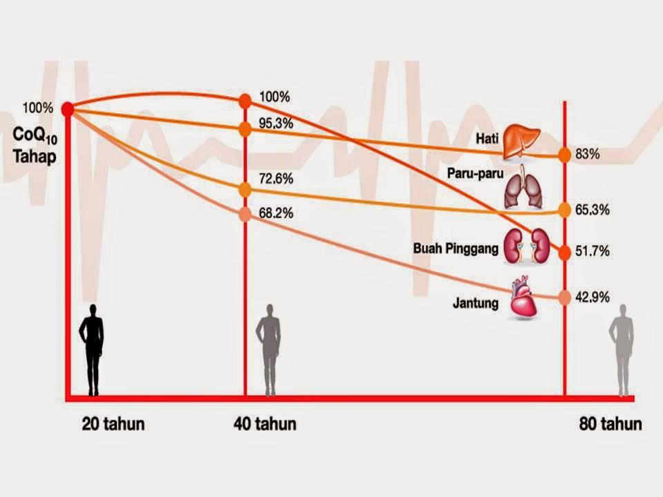 Graf kajian menujukkan kadar CoQ manusia semakin menurun mengikut umur