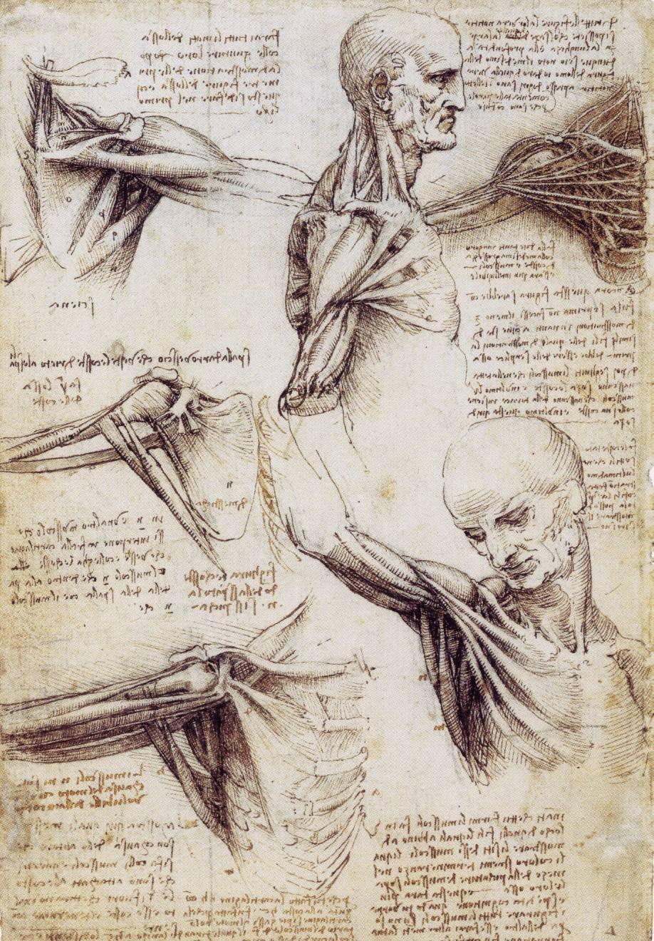 Großartig Da Vinci Anatomie Herz Bilder - Anatomie Von Menschlichen ...
