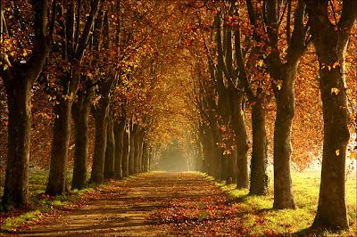 L'image represente une allee de platanes en automne. Les couleurs sont chaudes et atténuées par une très legere brume qui depose comme un filtre une gaze blanche sur le paysage, illuminé par ailleurs par le soleil. L'allée est jonchée de feuilles mortes et séchées comme l'indique leur couleur rouge orange. Le fait qu'il n'y ait pas ame qui vive renforce l'impression de calme degagee par ce paysage d'automne qui revêt du même coup des apparence de mystère en partie dues à la brume et à l'étrange luminosité. Cette superbe image illustre le non moins superbe poeme du Marginal Magnifique qui signe ici un texte encore plus personnel que d'habitude dans lequel la poesie naît de l'apparente etrangeté et incoherence du texte : en effet, Le Marginal Magnifique enumere en trois stophes une serie de courtes formules lapidaires sans liens directs entre elles exprimant ses sentiments à l'égard du monde et des êtres humains. Les quelques mots qui donnent leur titre au poèmes et justifient l'image d'illustration, «A l'ombre des platanes» reviennent en chaque début de strophe: on imagine le poète etendu sous les frondaisons automnales, cette situation étant propice à la mélancolie et à la réflexion désabusée. Un poeme surprenant qui se termine par une formule choc, engagée et sans concessions !!!