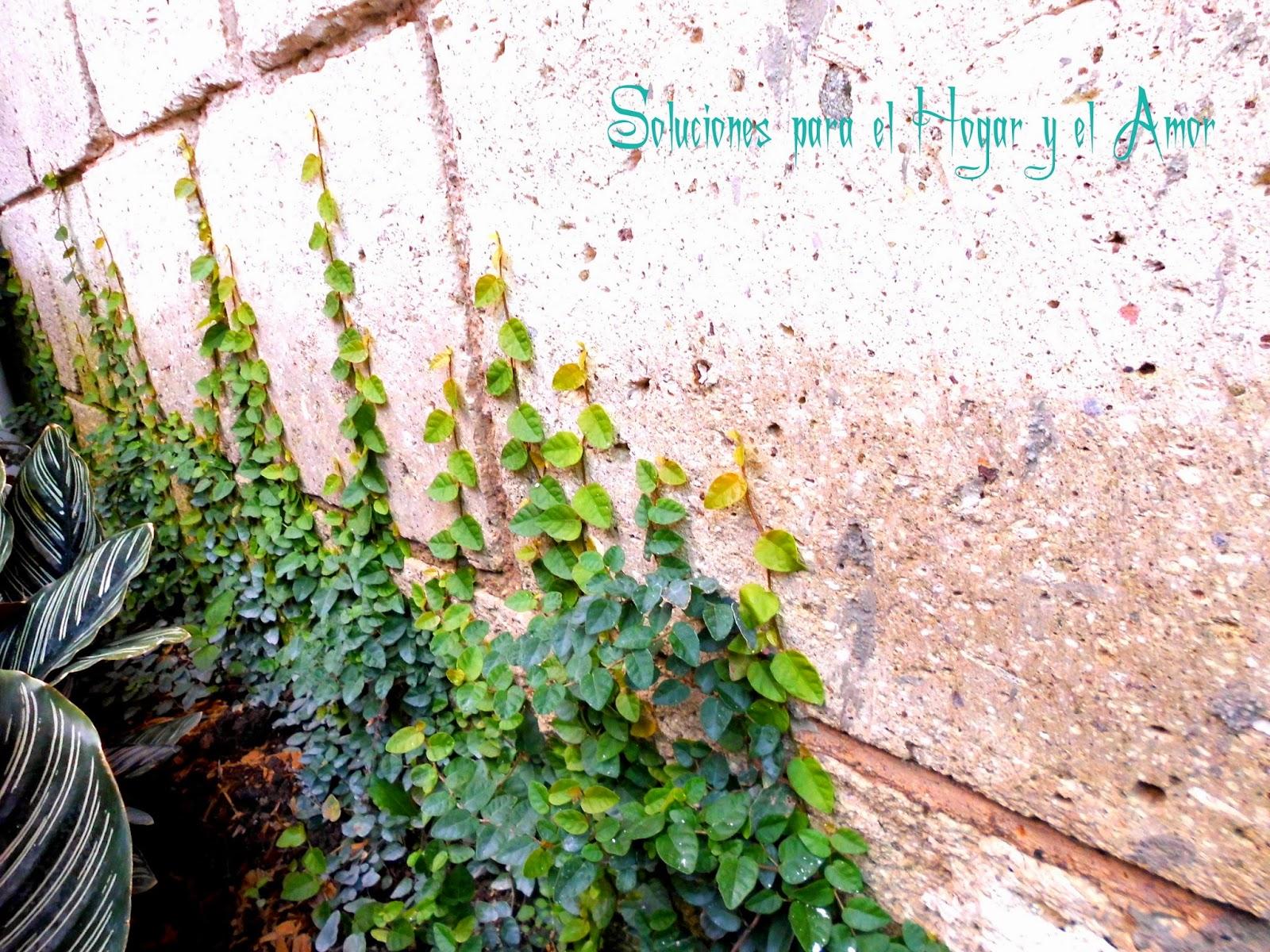 Plantas y Flores, planta trepadora