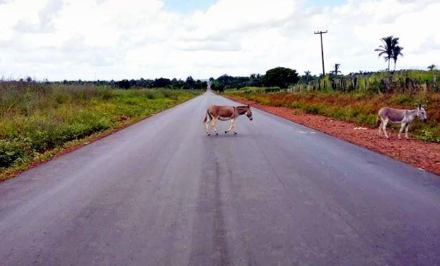 Resultado de imagem para rodovia entre coroatá e vargem grande