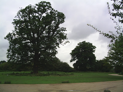 Trees in Essex, England