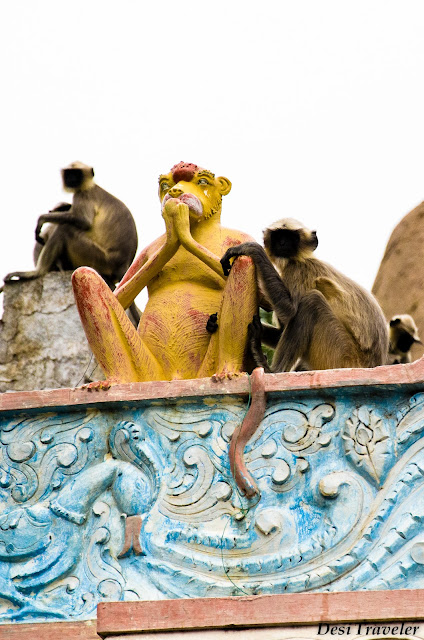 monkeys at the gate near birthplace of hanuman anegundi near hampi