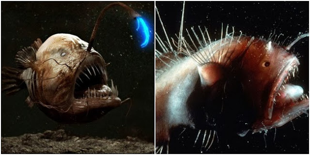 The Angler Fish