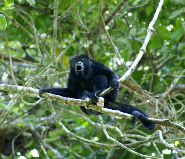 Imag Paisaje Animales Costa Rica