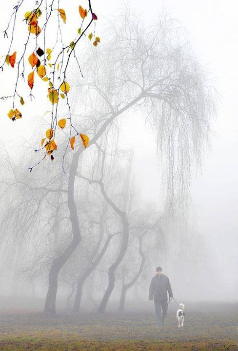 Mùa Đông và những chiếc lá vàng
