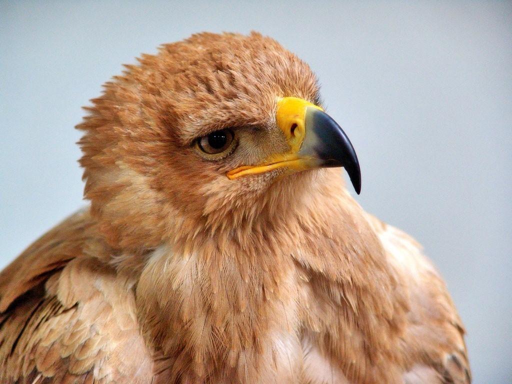 La Niña que nació Águila