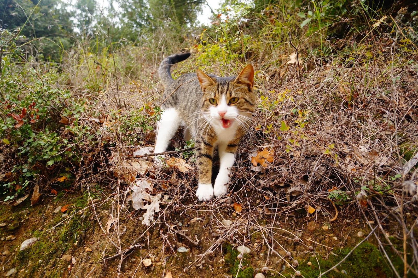 Кот-на-Метеорах
