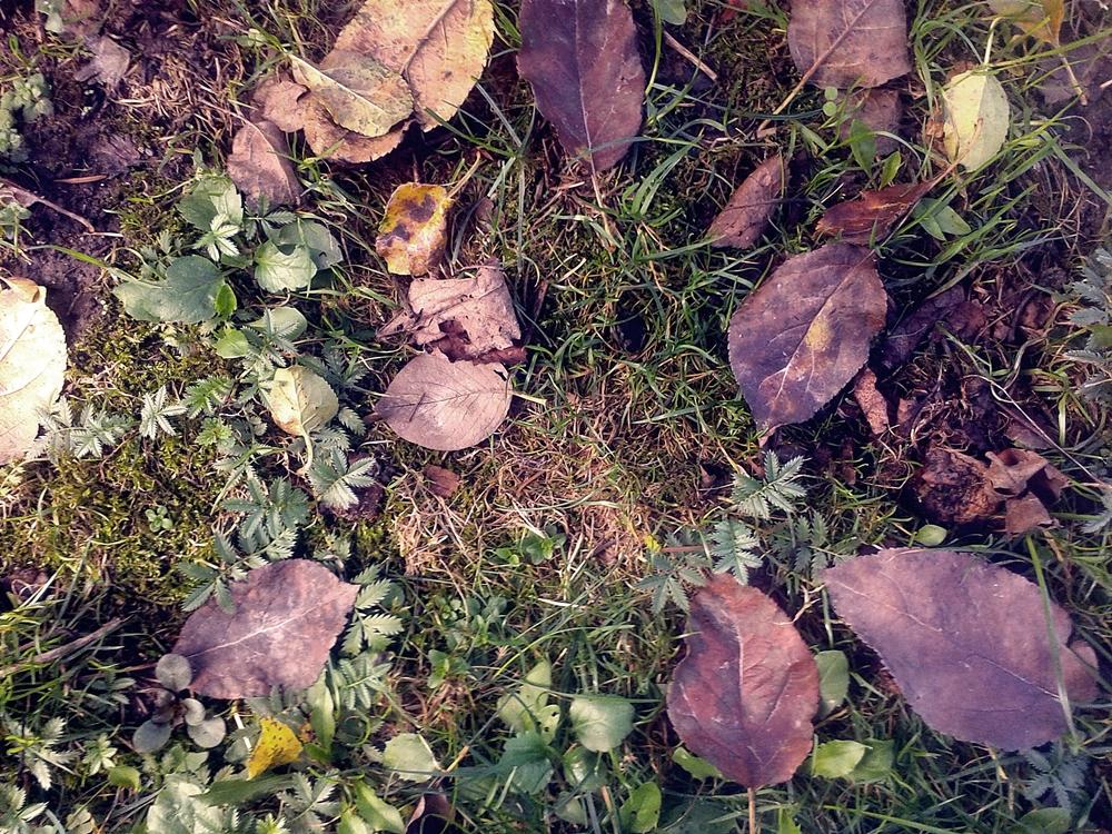 Liście w trawie