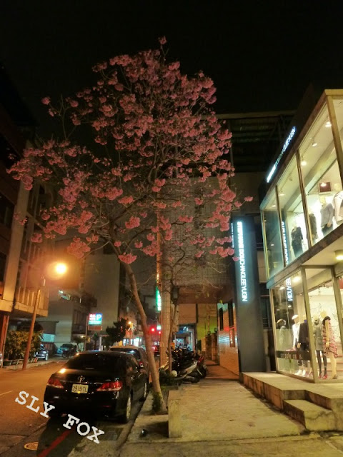 台南市樹林街紫花風鈴木