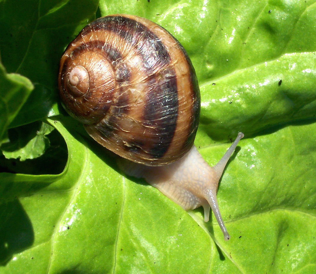 Snails Farm Snail Farming Business