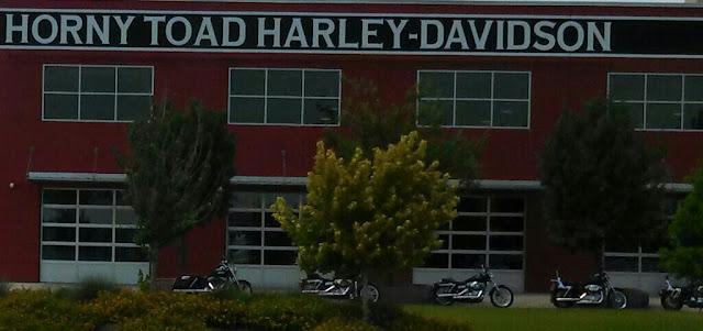 Horny Toad Harley Davidson