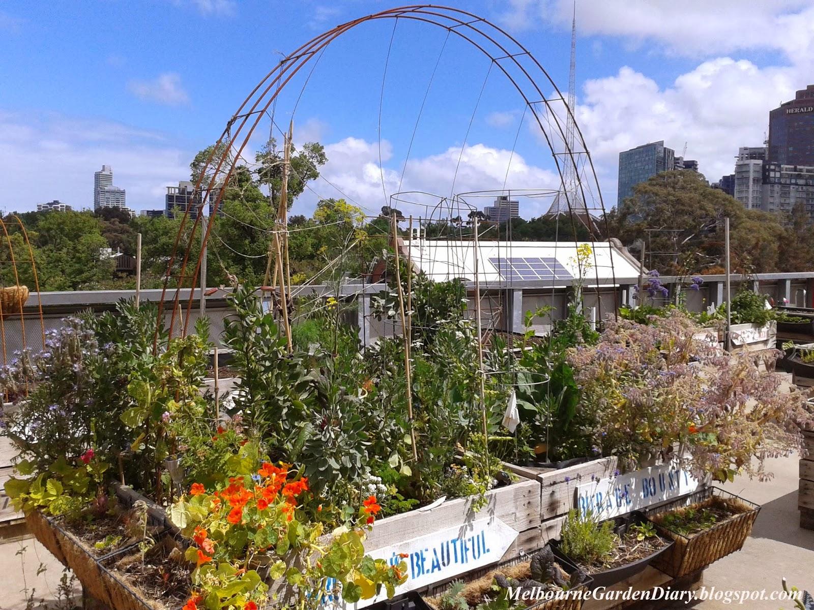 Melbourne Garden Diary: Pop Up Patch