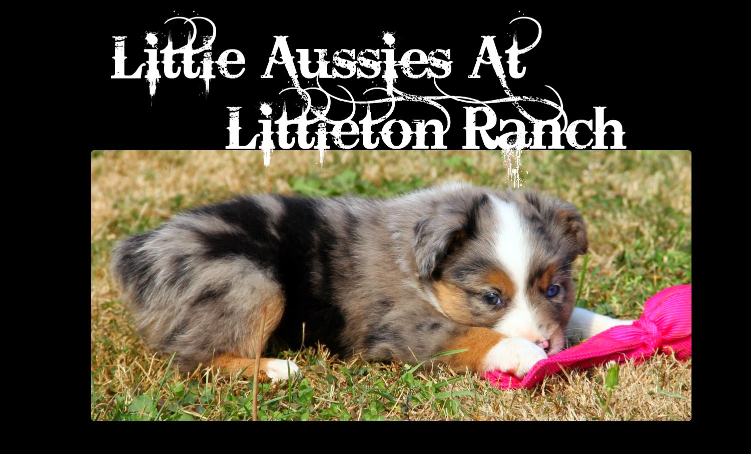 Little Aussies at Littleton Ranch