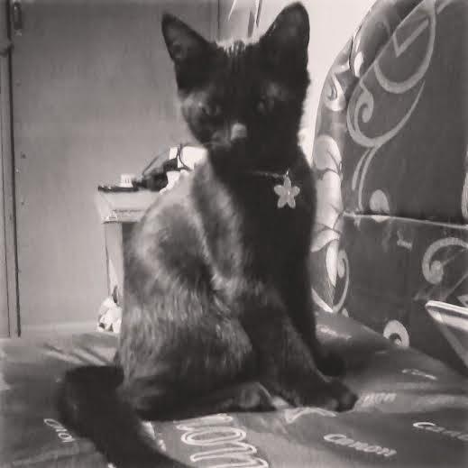 foto kucing hitam bernama Ai