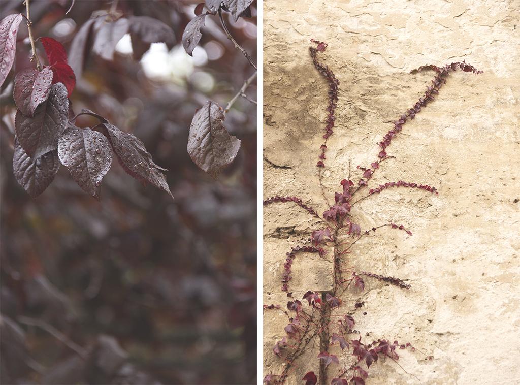 Fotografía otoño Cuenca
