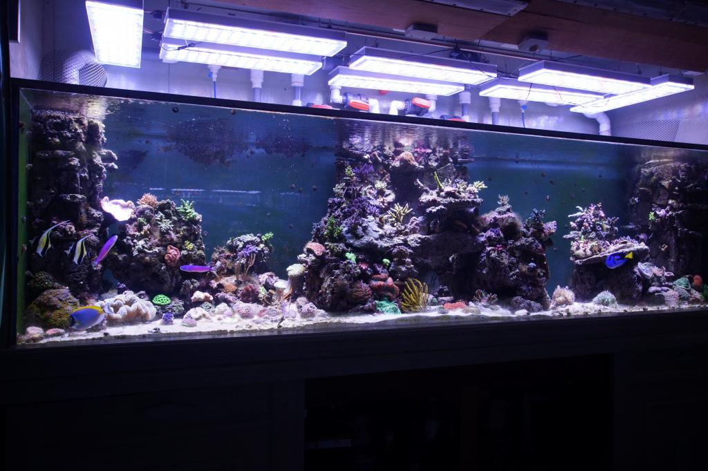 Led Aquarium Lighting Blog Orphek Orphek Led Review