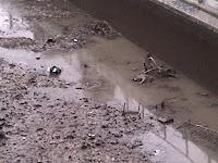 Carcasses rouillées multiples dans le Canal