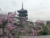 五重塔は、徳川家光の寄進によって竣工、災火をうけ、焼失も4回の受けた