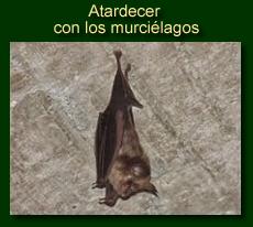 http://iberian-nature.blogspot.com.es/p/ruta-tematica-atardecer-con-los.html