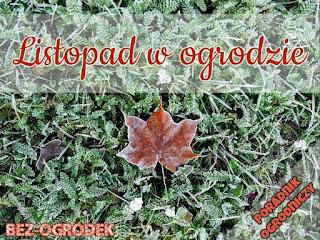 Poradnik ogrodniczy: listopad w ogrodzie