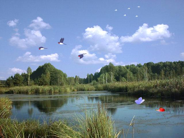 screensaver nature scenes - photo #47
