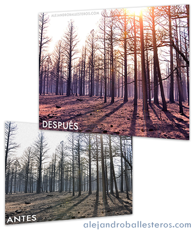 retoque fotográfico bosque