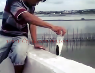 Gila Mancing Ikan Belanak Pakai Botol Seru Cui
