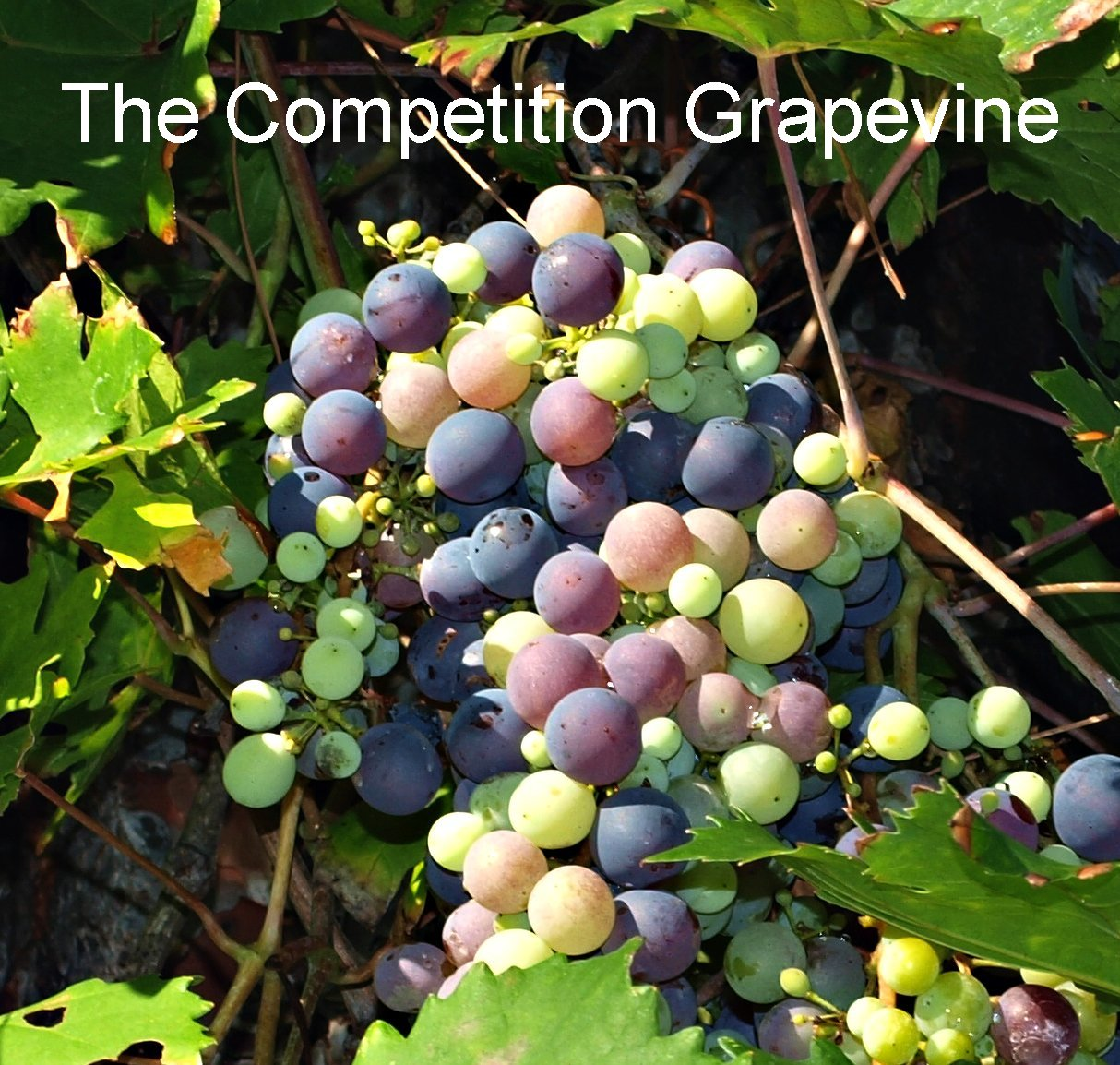 Competition Grape Vine  What On Earth Were You Looking For