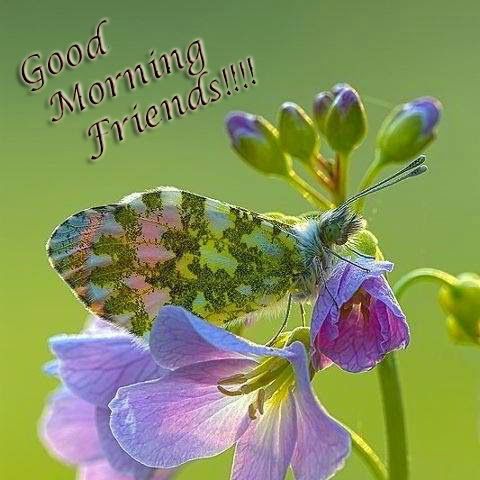 good morning my dears