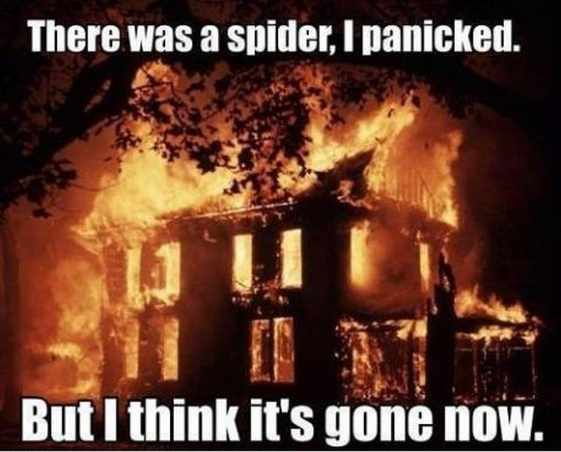 spider the confessions of arachnophobia lifestyle and beauty blog