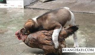 Nafsu Binatang