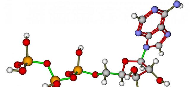 Nucleotidos no nucleicos y biologia