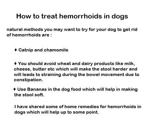 Best Solution Hemorrhoids Dog Most Effective Treatments